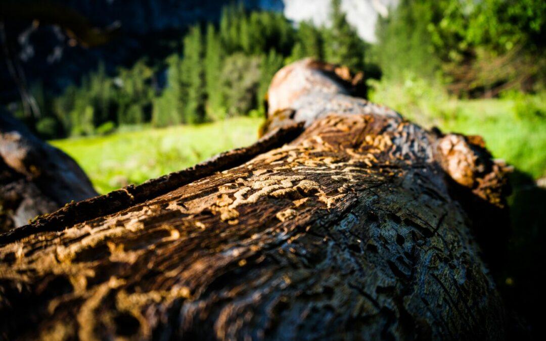 Borkenkäferplage fördert Digitalisierung 4.0