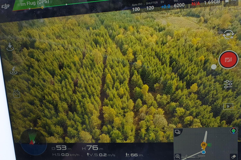 Luftbild Rückegasse nach Befahrung